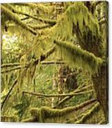 Mysterious Moss Canvas Print