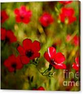 Mysterious Red Zone Canvas Print