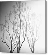 Mystic Trees 1 Canvas Print
