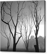 Mystic Trees 2 Canvas Print