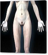 Naked Woman Canvas Print