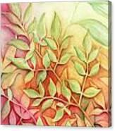 Nandina Leaves Canvas Print