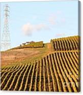 Napa Valley Vineyard . 7d9066 Canvas Print