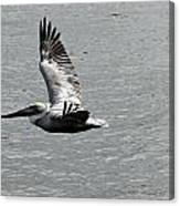 Naples Florida Pelican On The Prowl Canvas Print