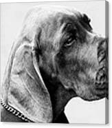 Napoleon Mischief Dog Portrait  Canvas Print