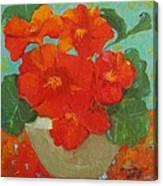 Nasturtium Canvas Print