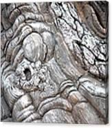 Natural Abstract 11 Canvas Print