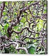 Natural Abstract 3 Canvas Print