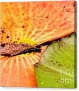Natural Abstract 40 Canvas Print
