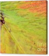 Natural Abstract 42 Canvas Print