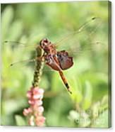 Nature Square - Saddleback Dragonfly Canvas Print