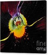 Nature's Amazing Colors - Pansy Canvas Print