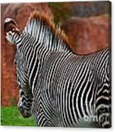 Nature's Barcode Canvas Print