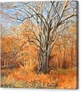 Nature's Canvas Canvas Print