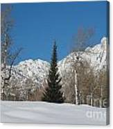 Nature's Christmas Tree Canvas Print
