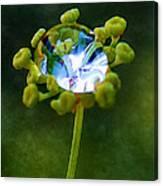 Nature's Diamond Ring Canvas Print
