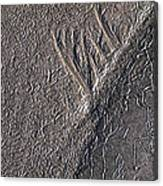 Natures Freeway Canvas Print