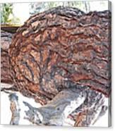 Nature's Natural Abstract Art Canvas Print