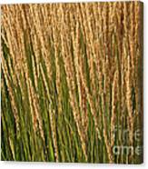 Nature's Own Gold Canvas Print
