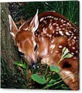 Nature's Precious Creation Canvas Print