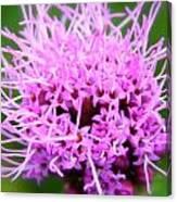 Natures Purple Canvas Print