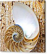 Nautilus Shell On Rusty Table Canvas Print