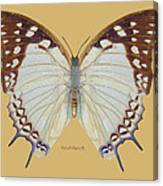 Nawab Butterfly Canvas Print