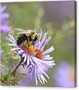 Nectar one Canvas Print