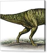 Neovenator Salerii, A Prehistoric Era Canvas Print