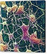 Nerve Cells, Sem Canvas Print