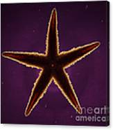Netted Sea Star Canvas Print