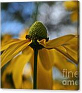 New Cone Flower Canvas Print