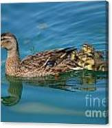 New Family Ducks Canvas Print