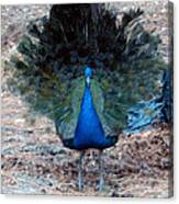 New Feathers Canvas Print