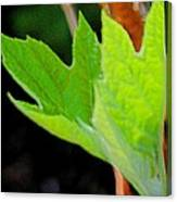 New Growth Two Canvas Print
