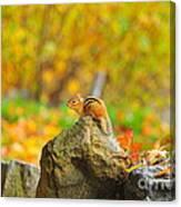 New Hampshire Chipmunk Canvas Print