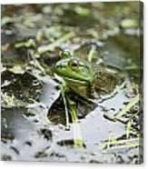 New Hampshire Frog Canvas Print