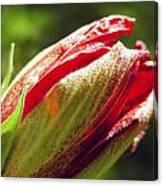 New Hibiscus Canvas Print