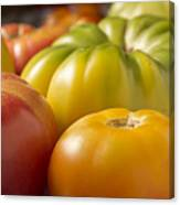 New Jersey Heirloom Tomatoes Canvas Print