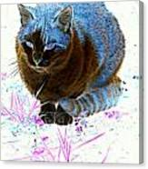 New Kitty Blue Canvas Print