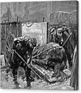 New York: Aspca, 1888 Canvas Print