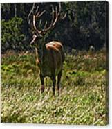 New Zealand Elk Canvas Print