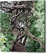 New Zealand Rainfores With Pohutukawa Trees Canvas Print