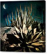 Night At The Desert's Edge Canvas Print
