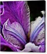 Night Iris Canvas Print