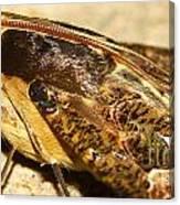 Night Moth Canvas Print