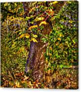 Nisqually Wildlife Refuge P12 The Maple Tree Canvas Print