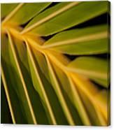 Niu - Cocos Nucifera - Hawaiian Coconut Palm Frond Canvas Print