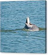 No Snook Limit For This Guy Canvas Print