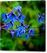 None Arrayed More Beautiful Canvas Print
